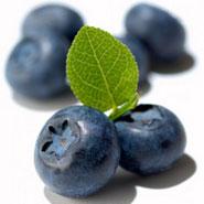 Черника — богатый источник антиоксидантов