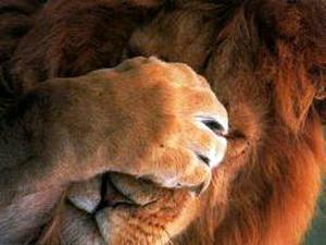 лев и женщина картинки